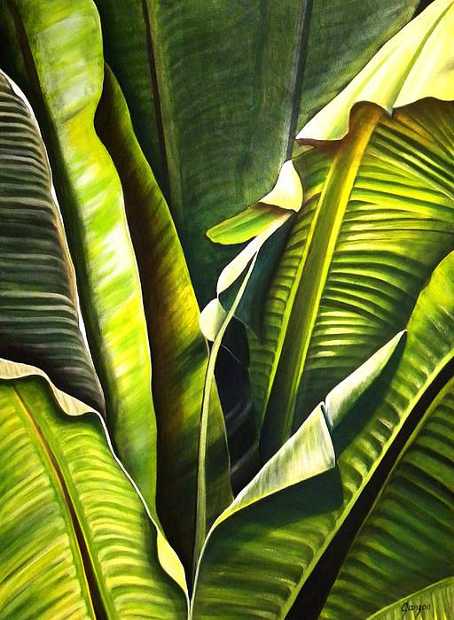 Platano tropical