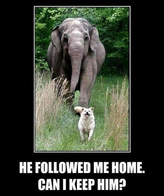 I can remember my Mom telling me if I found an elephant on the side of the road I'd bring it home with me.....yep, sure would have!
