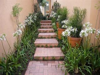 Construindo Meus Sonhos: Jardim