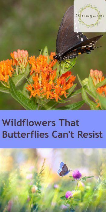 Wildflowers | Wildflowers for your Yard | Wildflowers for Butterflies | Wildflowers to Attract Butterflies | Wildflowers Tips and Tricks | How to Care for Wildflowers #wildflowers #butterflies