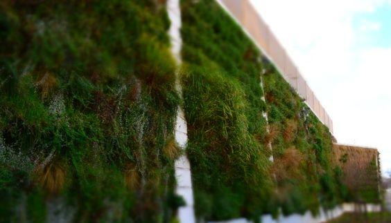 Gare Routière Aix en Provence (Mur anti-bruit) Tracer environnement  Plus de 1000 m2 de végétation viennent capter le bruit des bus.  14 DB d'absorption...