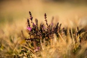 Naturfreunde bekommen seltene Flora und Fauna zu sehen #natur #wandern #landschaft #blumen #pflanzen #obertauern #salzburg #berge #familie #wochenende
