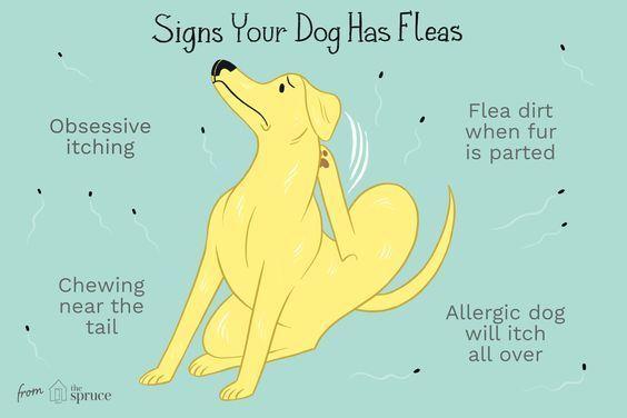 Pin On Flea Shampoo For Dogs