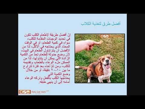 بيتس جوت ويب تقدم كيفية تدريب الكلاب Petsgotweb Convenience Store Products