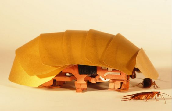 Why Would Anyone Want A Roach Robot? Watch