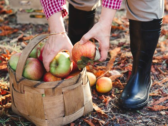 From jumping in leaf piles to pumpkin carving or baking apple pies, what fall activity are you most excited for?
