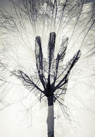 Silueta de la mano masculina sobre cielo y patrón de árbol sin hojas — Imagen de…