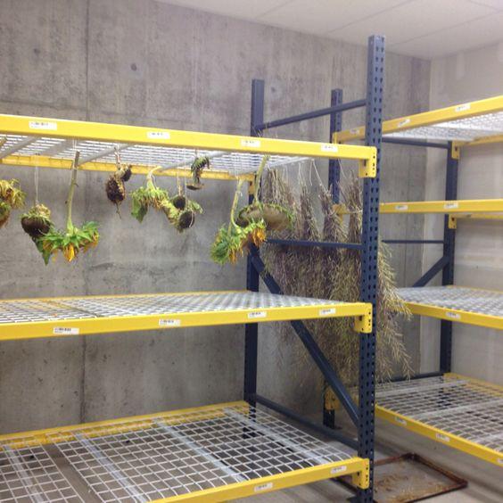 Basement Drying Rack. 21 Acres Farm, Woodinville, WA LEED