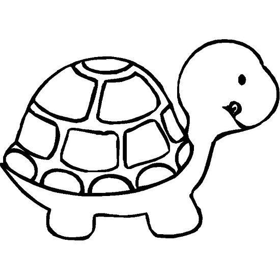 coloriage tortue coloriage enfant