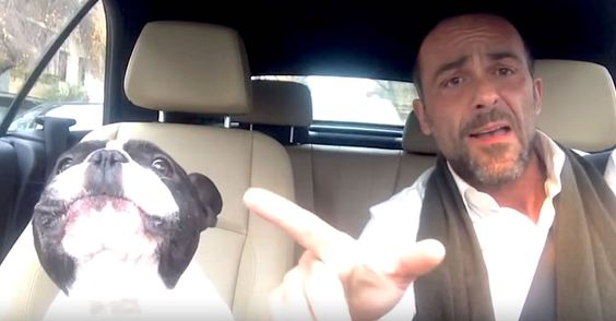 Bulldog Sings Adorable Duet With Dad In The Car - Dogs have quite the reaction to their humans' singing voices. Whether you think they're happily joining in or telling them to shut up, dogs have a way of stealing any singer's thunder with their howls and growls. Here, we meet a doting dad who makes sure to rig his car with a camera if it... View Article
