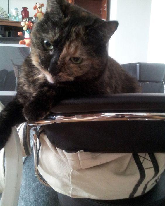 Iris haz a chair