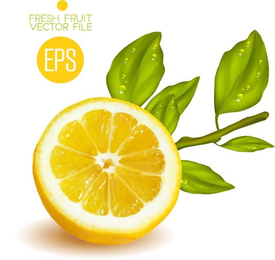 Fresh cut lemon design vector 02