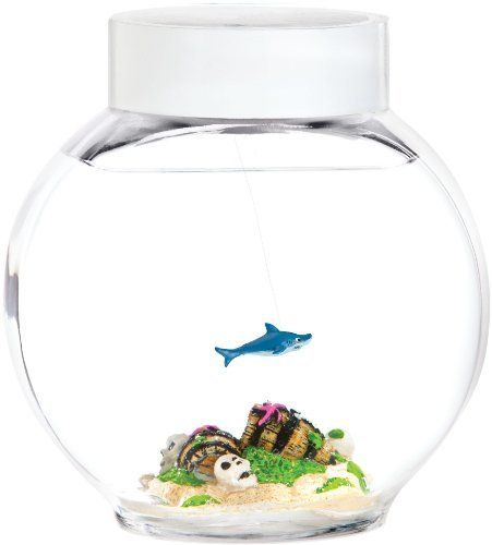 Pinterest the world s catalog of ideas for Easiest fish to care for in a bowl