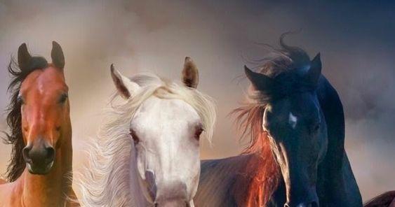 فريسة لأربع ذئاب البارت الاول للكاتب المصري محمد مالك جميع الحقوق محفوظة وانتهت مراسم الزفاف وذهبت سها مع زوجها حازم الي عش الزوجية لتبدأ حيا In 2020 Horses Animals