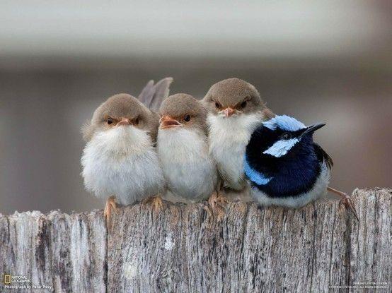 birds jjdonnalee