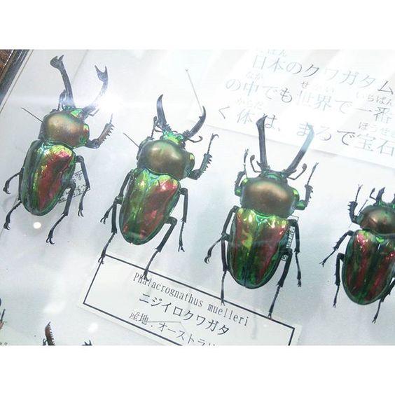 #colourful #beetles #sannomiya #Japan by superpetrichor