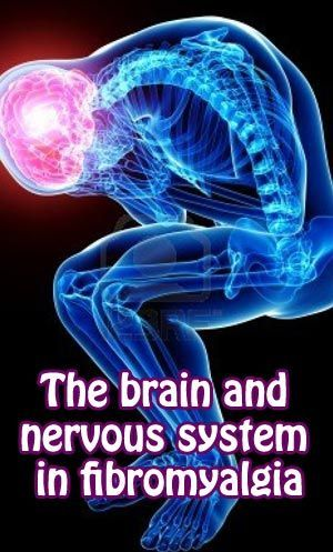 The brain and nervous system in #fibromyalgia