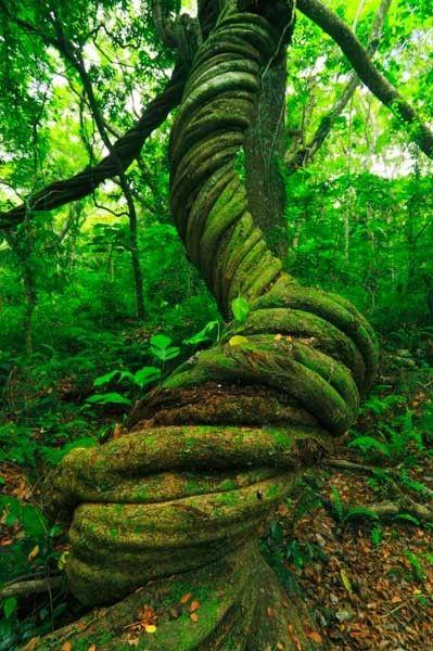 Fiji cuenta con terrenos de selvas tropicales que se caracterizan por una gran biodiversidad.
