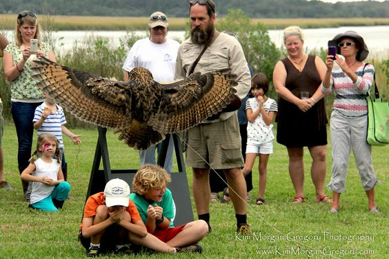 CHARLESTON MUSEUM ANNUAL PICNIC 2015 | DILL SANCTUARY | Always an amazing demonstration by the Avian Conservation Center for Birds of Prey Charleston, SC. This year at the Annual Charleston Museum Picnic two small great horned owls found new homes at Dill Sanctuary as they were released on the beautiful property.