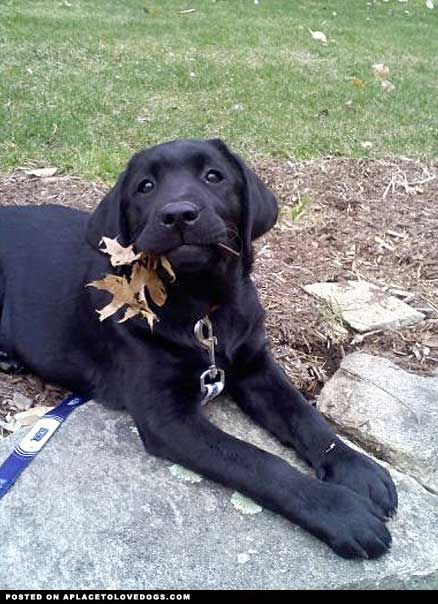 A Dog With A Leaf • from APlaceToLoveDogs.com • dog dogs puppy puppies cute doggy doggies adorable funny fun silly photography
