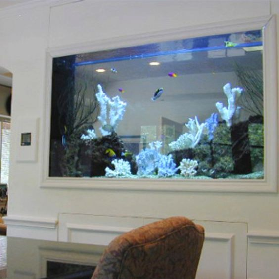 I want a fish tank in the wall of the kitchen and living for Wall fish tanks