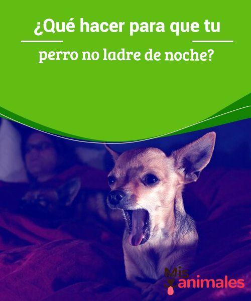 Qué Hacer Para Que Tu Perro No Ladre De Noche Mis Animales Perros Perros Ladrando Adiestramiento Perros