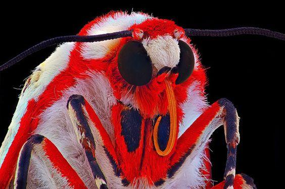 Ürkütücü Fotoğraflarıyla Makro Böcekler | Line.do - Discover stories through timelines and tell yours, too!