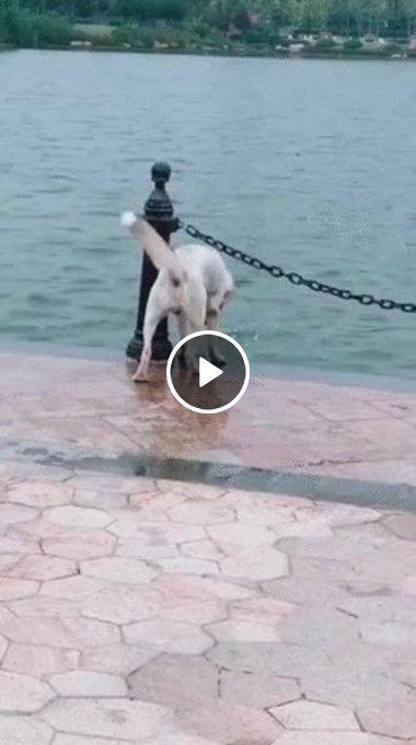 Esse cachorrinho salva seu Amigo.