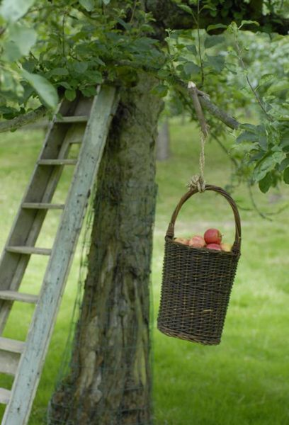 Basket of apples. moment love