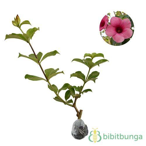Pin Di Jenis Bunga