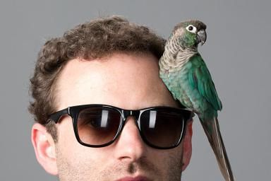 Green-cheeked Conure, (Pyrrhura molinae), Bird, Ray-Bans, 30-40 year old, male, curly hair, 5 o'clock shadow, - Sean Murphy/The Image Bank/Getty Images