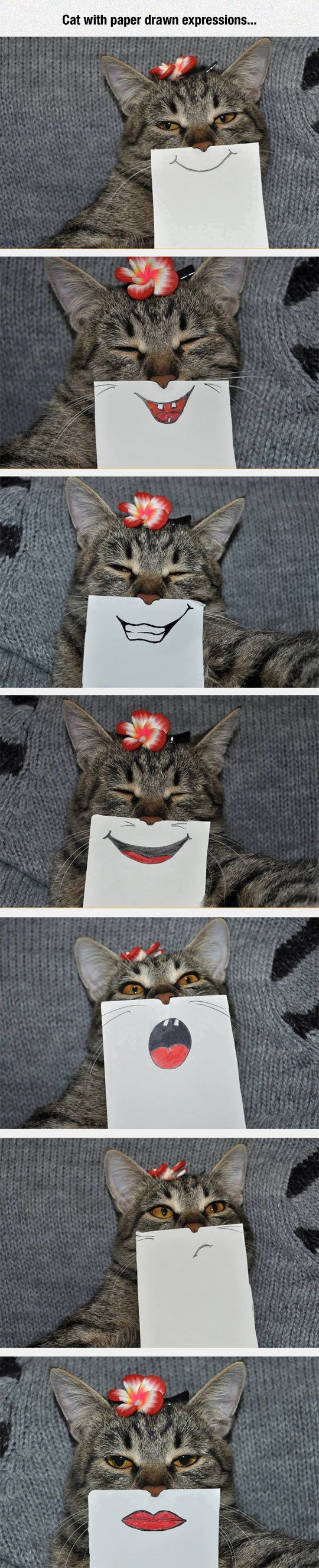 Cats With Paper Drawn Expressions cute animals cat cats adorable animal kittens pets kitten funny pictures funny animals funny cats:
