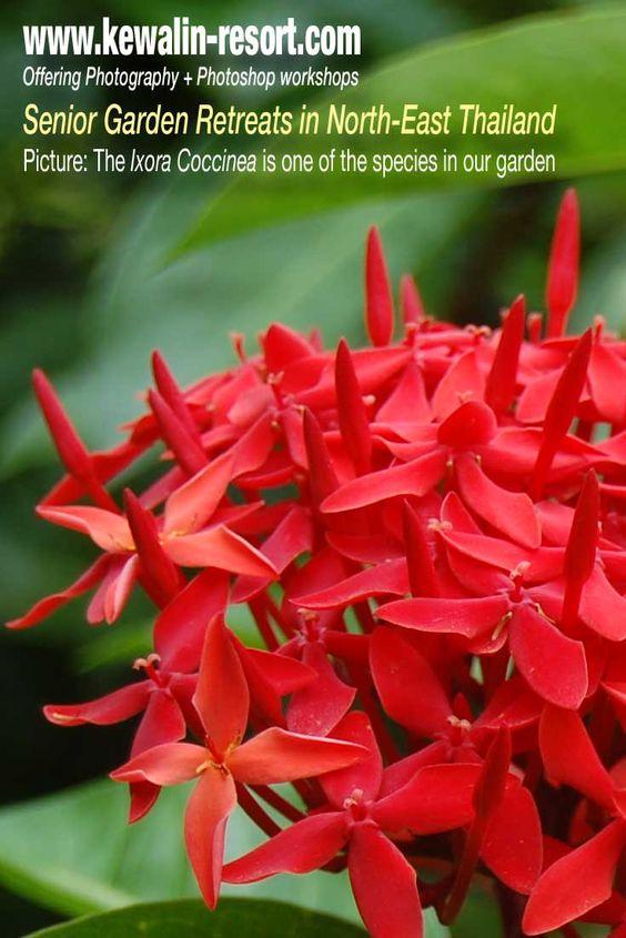 Workshop: Flower Photography