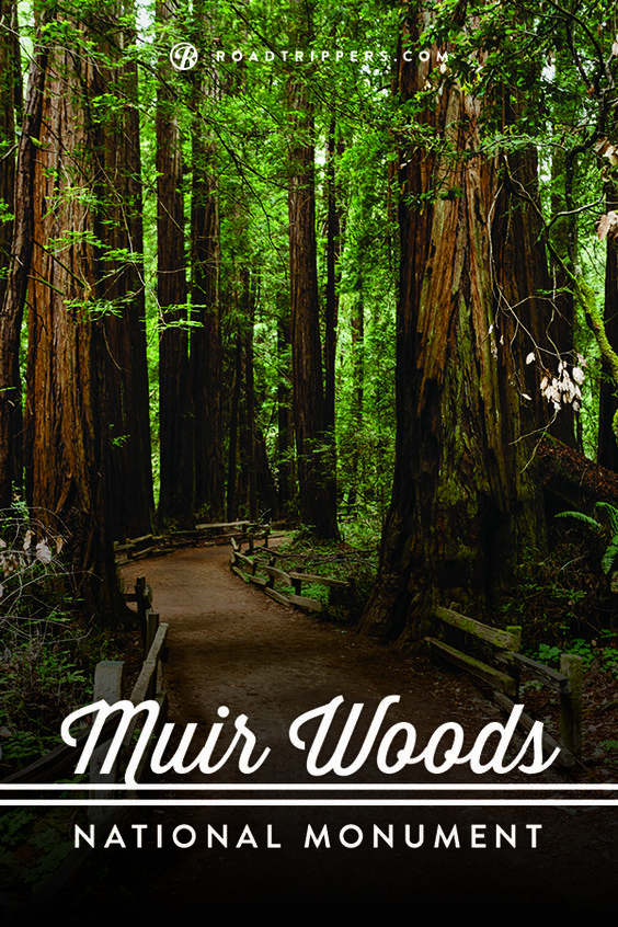 Muir Woods National Monument- a Tree Lover's Paradise.