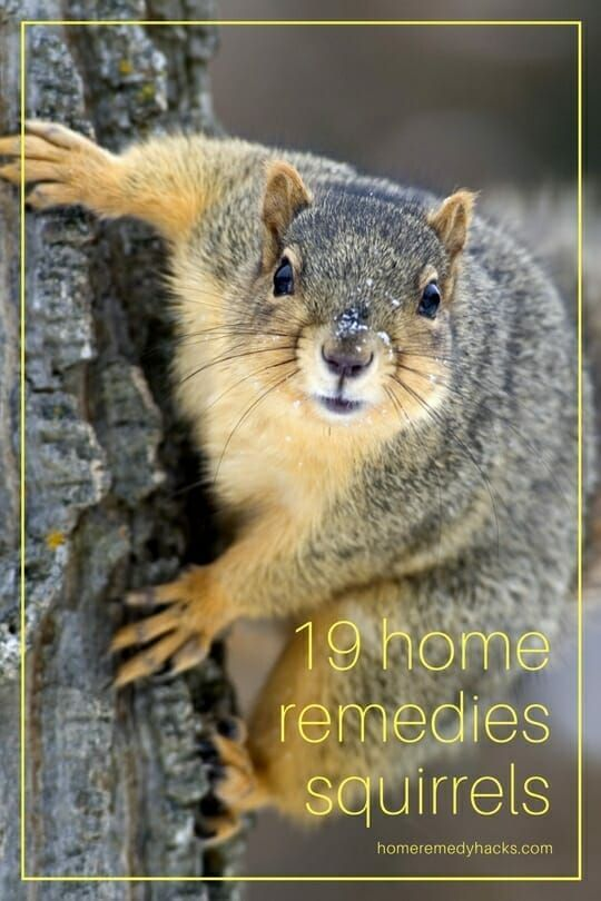 6d861704fa17e4c4cd291ea2deffae75 - How To Get Rid Of Squirrels The Natural Way