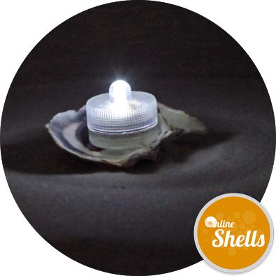 Oyster Shells - Sea Washed - Online Shells - Buy Sea Shells - OnlineShells.co.uk