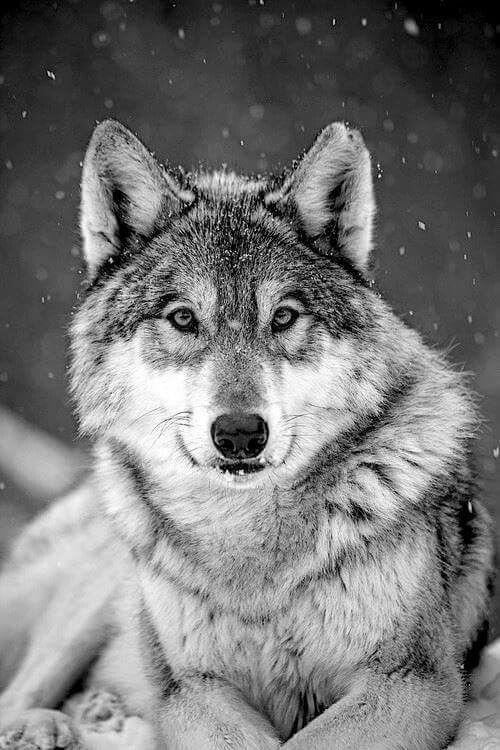 1 – Farkas