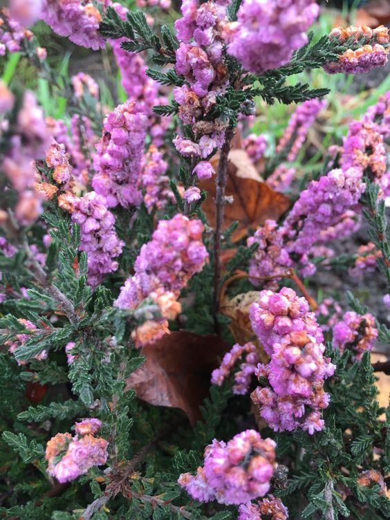 Flowers dans ma garden