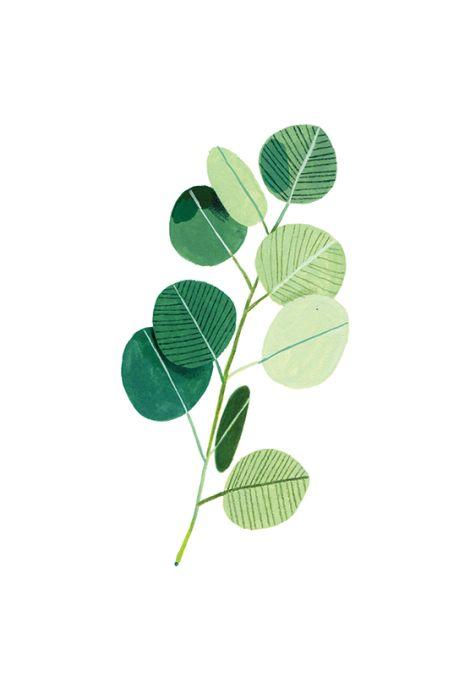 Beatrice Cerocchi -Eucalyptus: