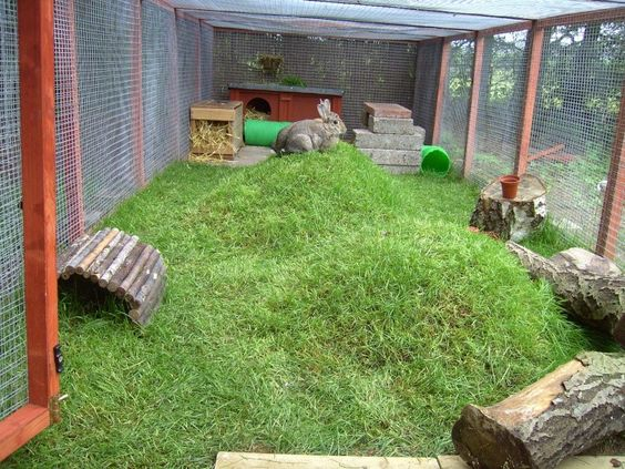 Great example of a rabbit run. I love the mounded earth, much more interesting for bunnies.