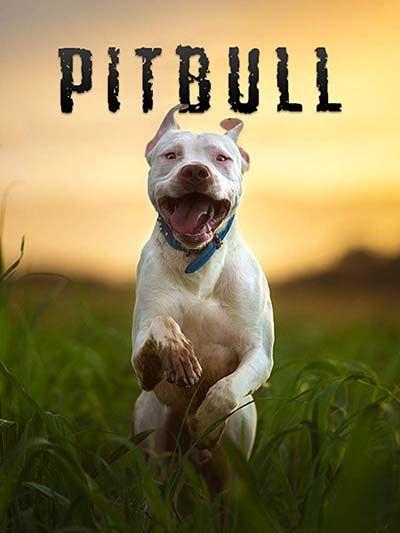 20 Dog Documentaries On Netflix And Amazon Dog Documentary Dogs