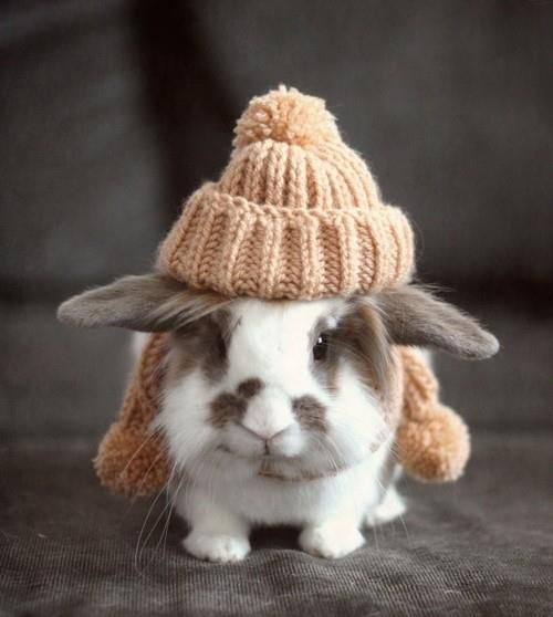 This poor bunny looks totally uncomfortable!