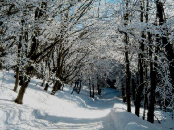 z- by ekowalska - Snowy Day