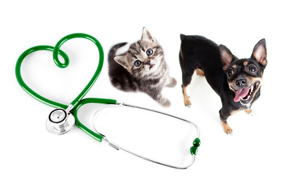 How Seniors Can Tame Pet Care Costs