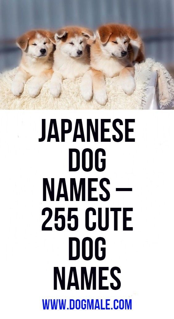 Japanese Dog Names 255 Cute Dog Names With Images Cute Names