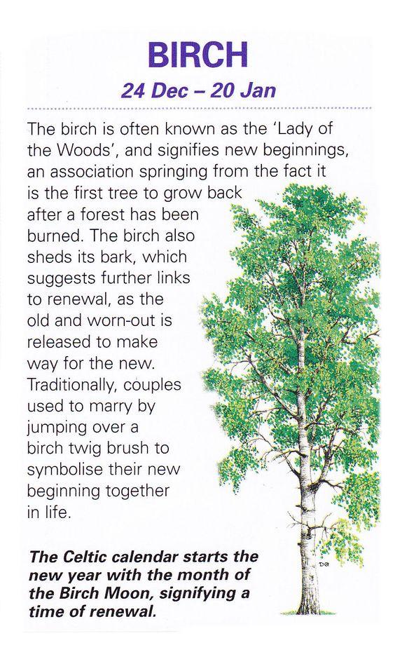 Celtic sacred trees Birch: