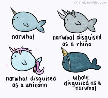 Narwhals are tricky bastards.