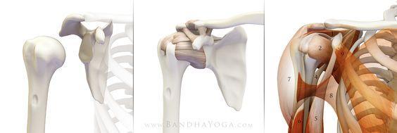 Preventing Yoga Injuries vs Preventing Yoga, PartII. Interesting article!