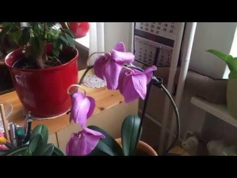 Dlaczego Opadaja Kwiaty Storczyka Orchdei Przyczyny Youtube Plants Garden Planter Pots
