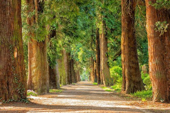Avenida, Árboles, De Distancia, A Pie, Verde